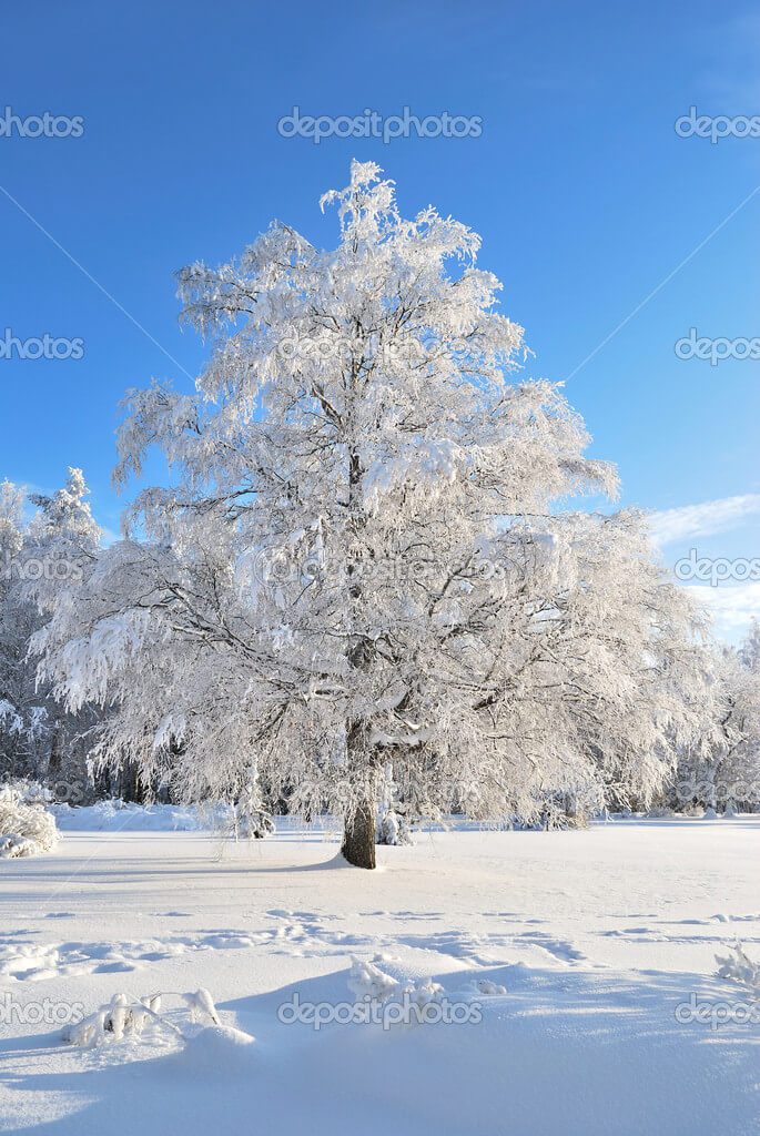 Beautiful tree in rime on the background of blue sky